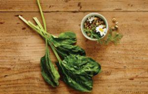 nutram - шпинат и ромашка - успокаивающий эффект