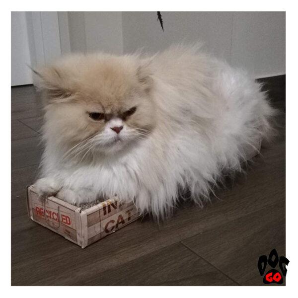 Когтеточка для котов CROCI Cardboard, гофрированный картон, 48x12.5x5 см - 4