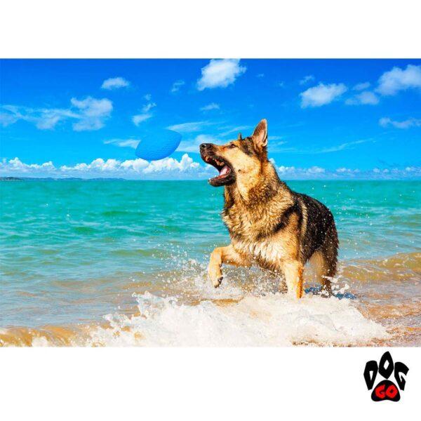 Мяч для собак прочный COLLAR PitchDog для апортировки, d9 см-3