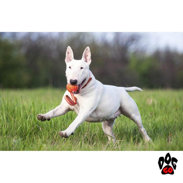 Мяч для собак прочный, на веревке ЛАЙКЕР Лайн COLLAR-3